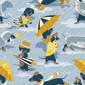 Regen teckels