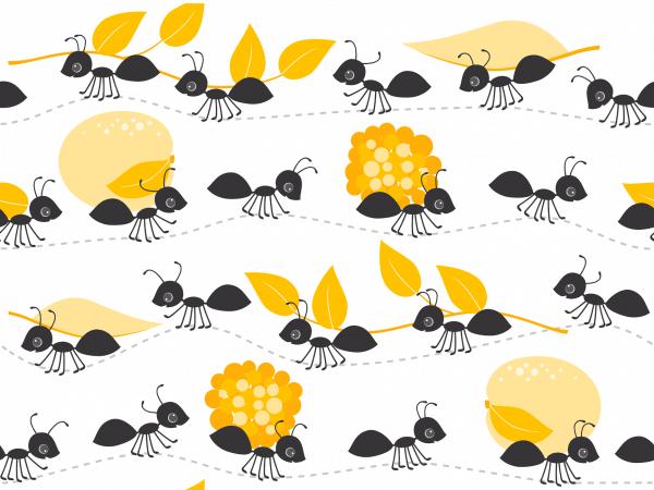 zomer mieren